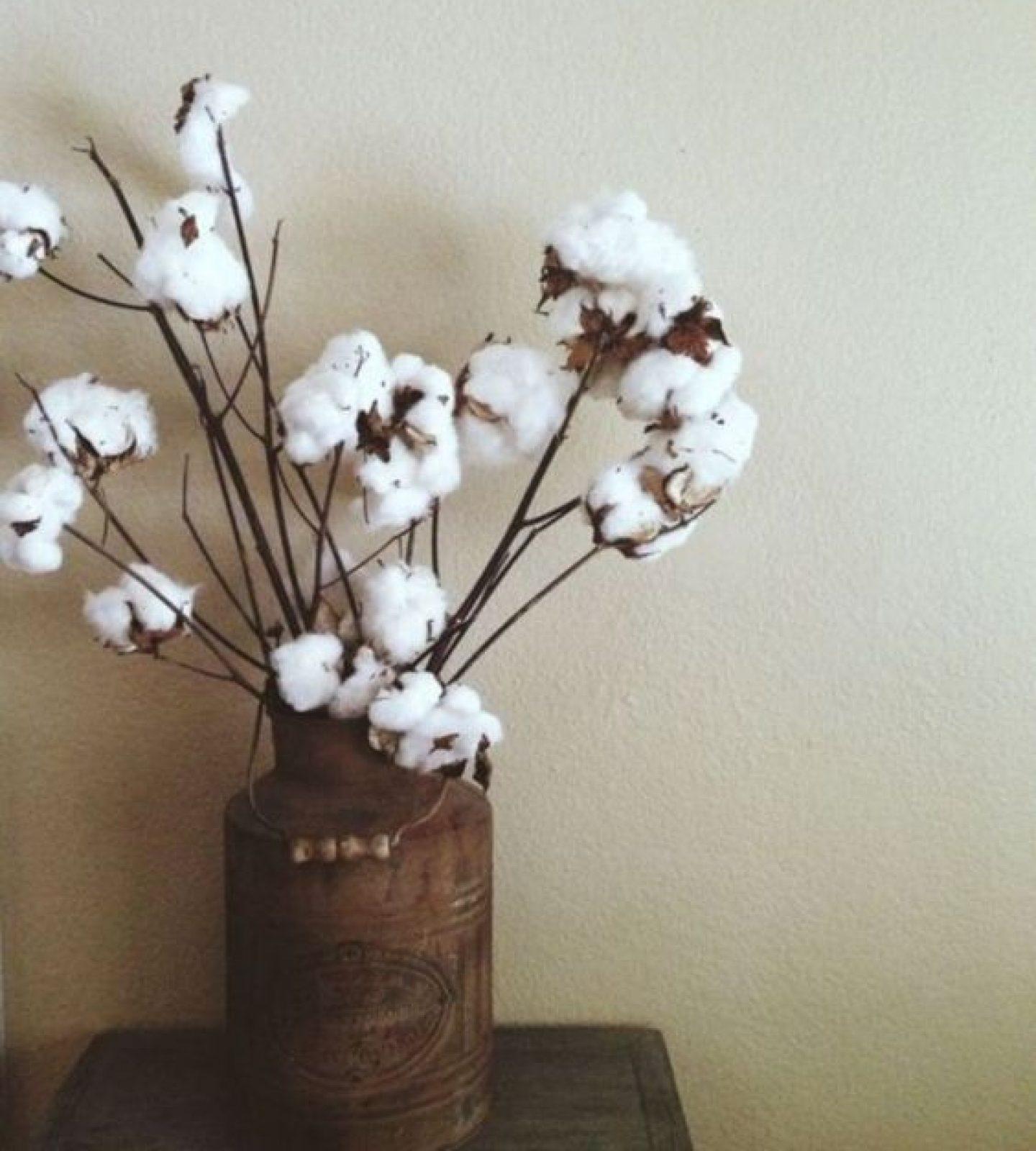 coton-fleur-écologique